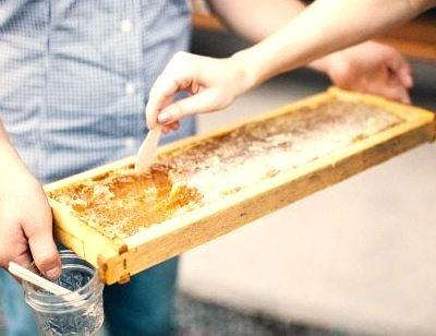 Honey Harvest Yvonne Rock Photo Blog